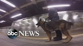 NYPD Offers a Firsthand Look at the Life of a K9 Officer
