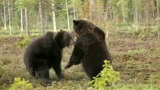 Amazing Animal Life   When Wild Animals Attack Each Other   Craziest Wild Animal Fights   Facebook