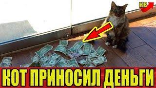 Кот каждый день приносил кучу денег! Когда люди узнали, где он их берет, у них отвисла челюсть!
