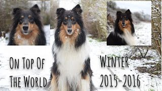 On Top Of The World   Jodie The Rough Collie♡