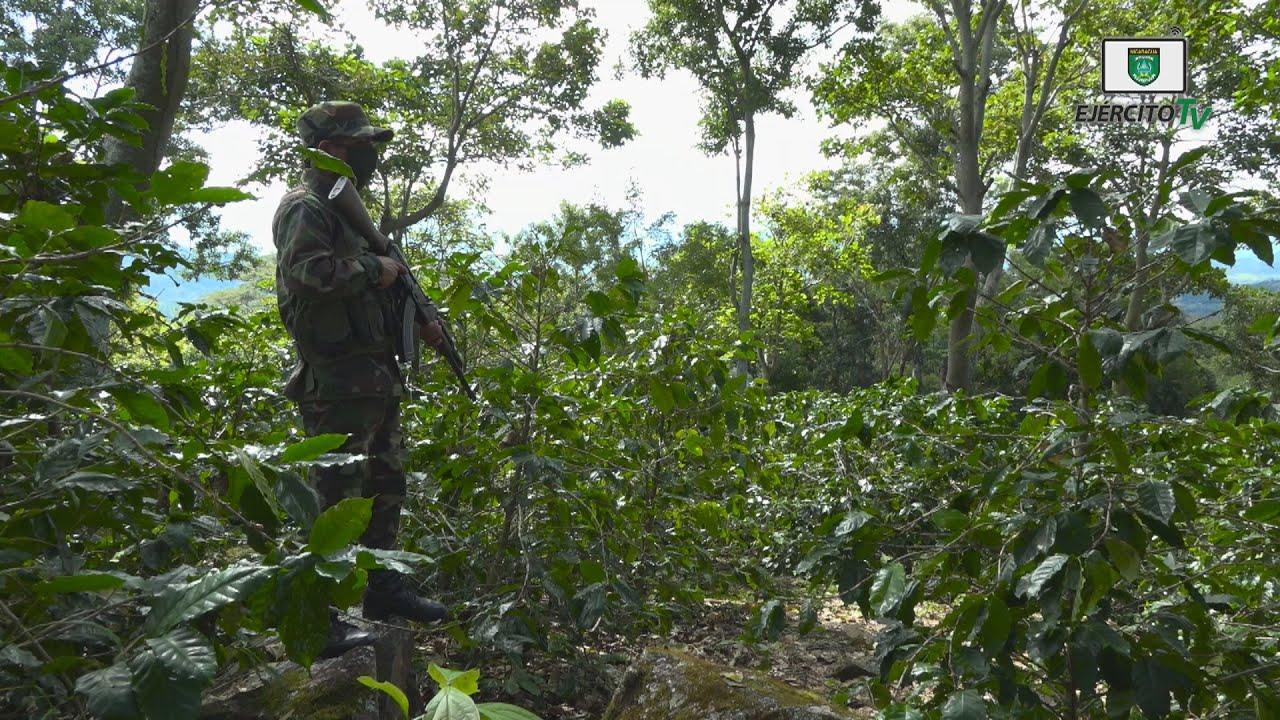 6 Comando Militar Regional cumple el Plan de Protección y Seguridad a la Cosecha Cafetalera