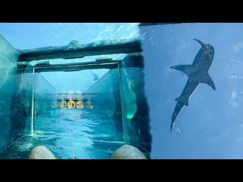 Shark Attack Waterslide Ride In Dubai Atlantis Aquaventure Water Park (2021)