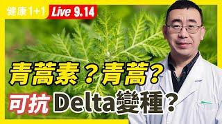 青蒿素能抗新冠嗎?青蒿能對抗Delta變種病毒?鼻腔免疫力差可導致嚴重的新冠!感染Delta變種,無症狀時也帶傳染力,該怎麼辦(2021.9.14)| 健康1+1【直播】