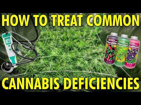 Identify and Fix Common Cannabis Plant Deficiencies – Marijuana Grow Guide
