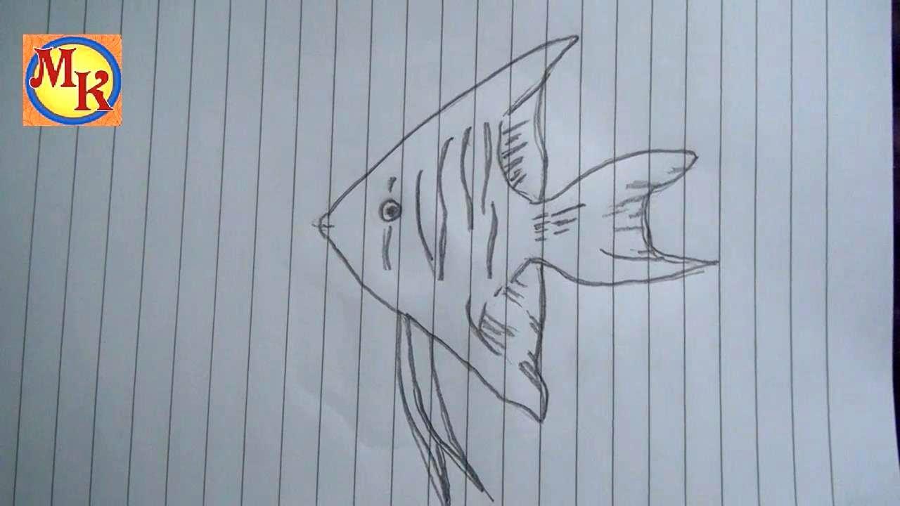 Cara Menggambar Ikan Layang Layang YouTube