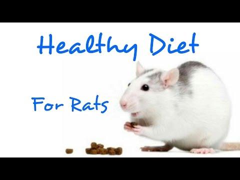 Healthy Diet For Pet Rats | Rattiepedia: Episode 12