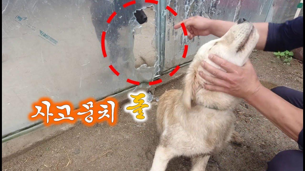 사고뭉치 반려견, '돌'의 만행-사라진 병아리 ㅠㅠ//Dog causing trouble and disappeared chick