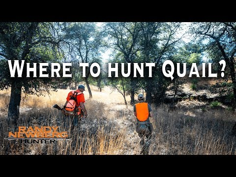 Where To Hunt Mearns Quail