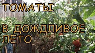 Как вырастить ТОМАТЫ (ПОМИДОРЫ) в ХОЛОДНОЕ лето. Профилактика ФИТОФТОРЫ(Как защитить томаты от фитофторы и получать урожай при любой погоде! Ставьте лайки, комментируйте видео!..., 2015-08-03T19:01:38.000Z)