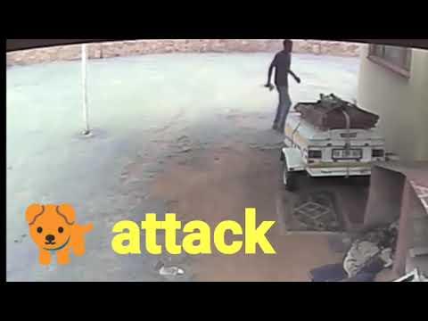 Dog 🐕 attack CCTV camera record of theft