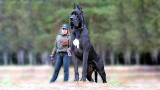 11 Biggest Dogs in the World