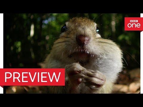 Chipmunk acorn wars - Autumn: Earth's Seasonal Secrets Preview - BBC One
