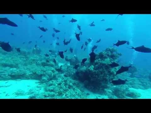 Subacquea -  Sport Estremo Italia - Shark Feeding In Sudan A Shaàb Rhumi - Immersione Con Squali