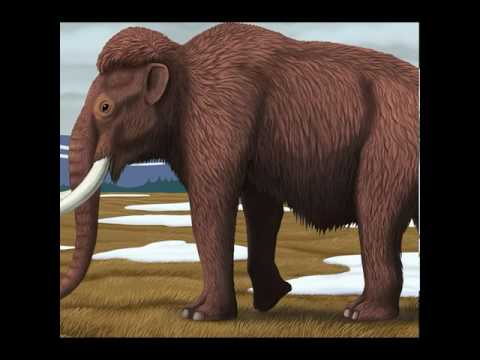 Let's bring back the wooly mammoth