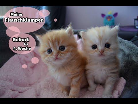 Babykatzen Von Der Geburt Bis Zur 4 Woche