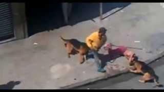 Не кидай камнями в собак