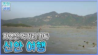 신안 천사의섬_ 1004개의섬 '신안군' 여행 #001_테마여행 길