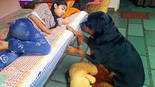 Rottweiler showing his power||funny dog videos||trained dog.