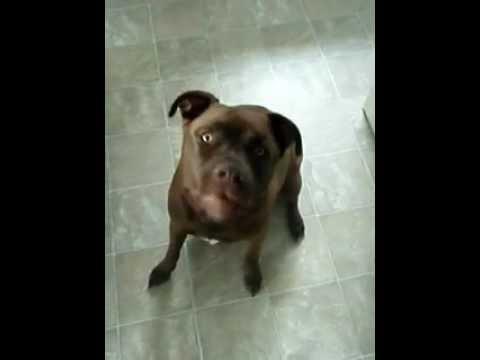 Dog Whisper Trick