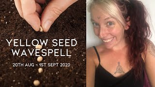 Seeding New Concepts - 2020 Mayan Dreamspell Astrology - 20th August - Yellow Seed Wavespell