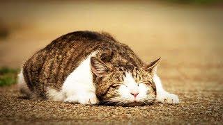 【海外の反応】驚き!日本の野良猫のみが持つとある特徴に世界が衝撃!外国人「俺の国じゃありえない!」「やはり日本はすごいな!w」仰天!