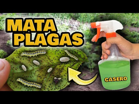 MATA Orugas, Pulgones, Cochinillas, Hormigas y Moscas Blancas | Insecticida Casero para Plantas
