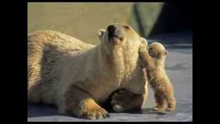 Animals have feelings too!! A MOTHER