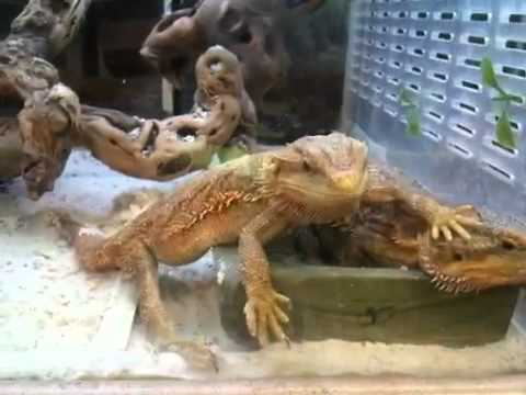 Petco reptiles - YouTube