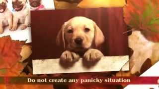 Puppy Potty Training Tips | Puppy Crate Training Tips | Border Collie Puppy Training Tips | Crate