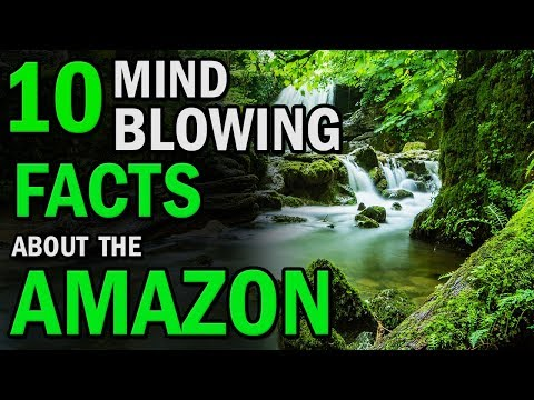 10 Mind Blowing Facts About The Amazon Rainforest | Creative Vision
