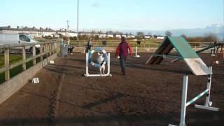 Deaf Dog Horus Agility Nov 2009