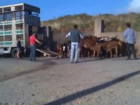 trasporto animali (viaggio a messina).