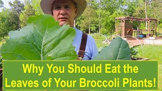 Why You Should Eat the Leaves of Your Broccoli Plants