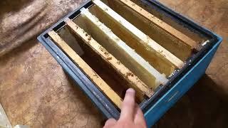 видео Пчелиный мёд по ГОСТу