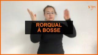 BIOLOGIE MARIN - Rorqual à bosse