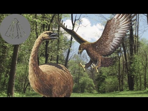 How The Haast's Eagle Ruled Over New Zealand