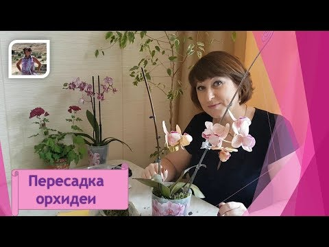 Как пересадить орхидею в домашних условиях? Легко и просто !!!