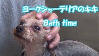 初めてお風呂の時間を撮影してみました 気持ちよさそうに⁉諦めた様子⁉