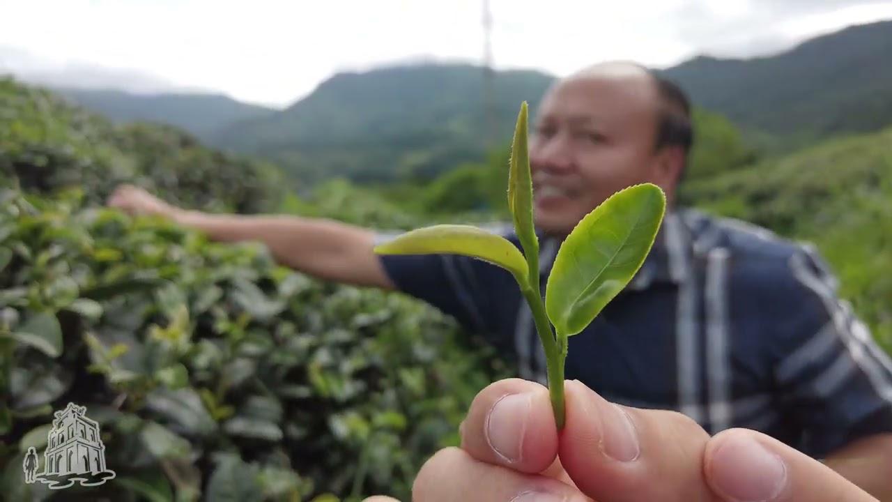Hoá ra đây là loại chè 20 triệu 1 cân - đắt nhất Việt Nam