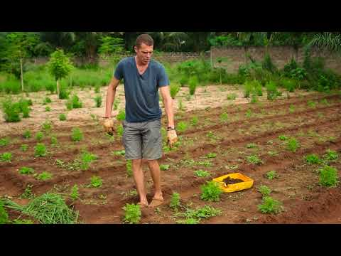 Maison de l'Artemisia : culture des Artemisia annua et afra