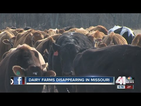 MO dairy wants a boost from state with bill called Missouri Dairy Revitalization Act