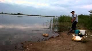 Карп. Karp. Carp. Fishing.