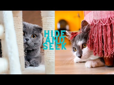 baby cute cats- playing hide and seek game | funny 2020 @catsanddogslife