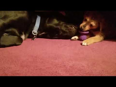 Super Cute Puppy Play