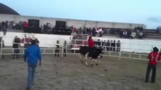 Rancho el Solitario de tlaunilolpan y su Toro El Canguro