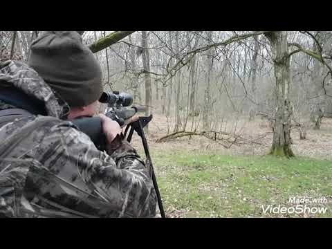 Calling Muntjac With A Cherry Wood Deer Caller