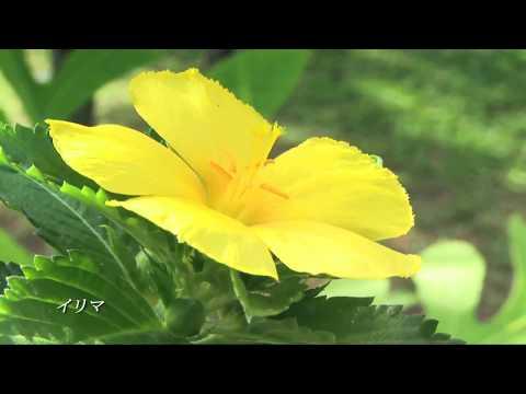 Guam Sankyo Garden