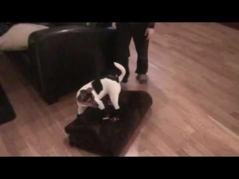 Alvorlig Hund med sokker - YouTube BH-61