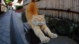 Смешные коты  Замечательная подборка  #2