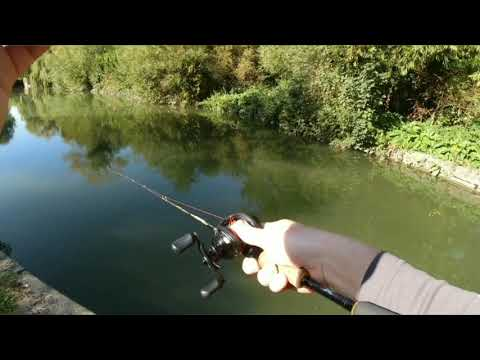 Big UK Canal Perch On The Abu Garcia Roxani BF8